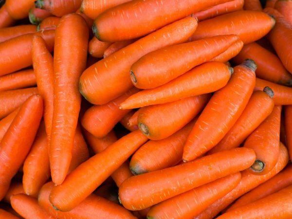 Полезно ли давать животным морковь