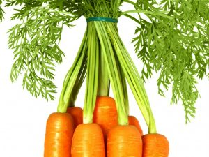 Характеристика корневой системы моркови
