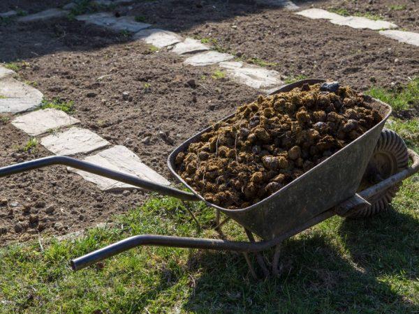 Органические удобрения следует использовать осторожно