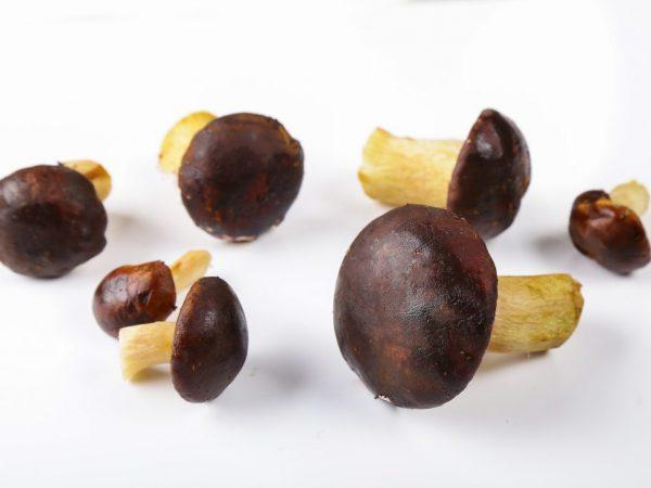 Характеристика польского белого гриба