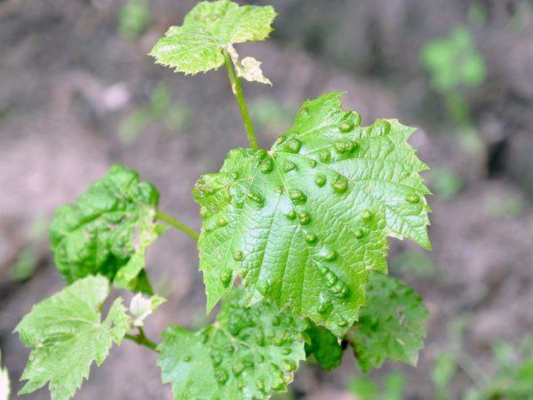 Вредители могут навредить растению