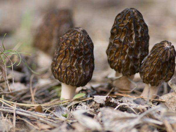 В лесах Самары можно найти редкие виды грибов