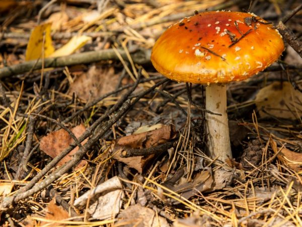 Ядовитые грибы опасны для жизни