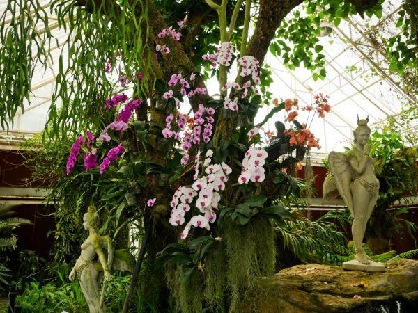 Растения Декоративные Кролики Уход