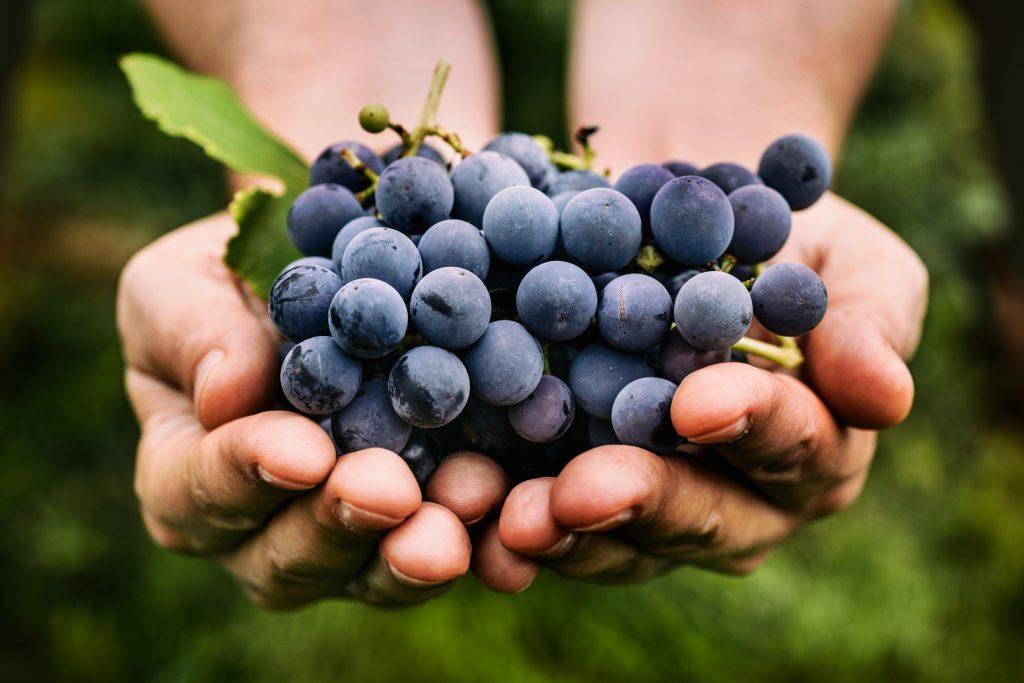 Лучшие сорта синего зеленого и розового винограда их описание и характеристика