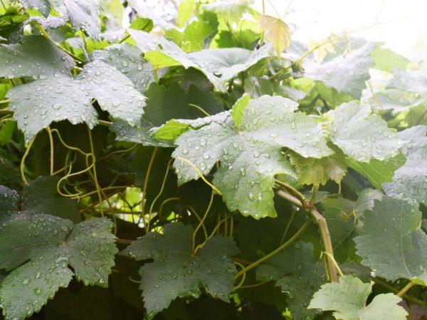От качества ухода зависит урожайность растений