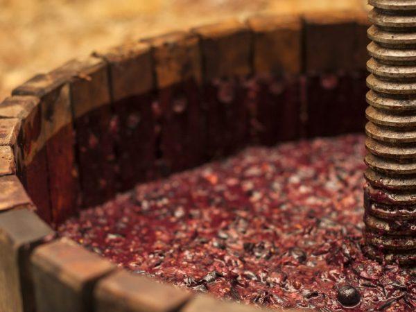 Виноградное сусло