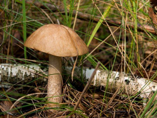Веневские леса богаты грибными местами