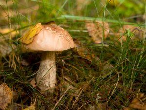 Виды грибов Владимирской области в 2018