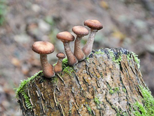 В грибах много углеводов