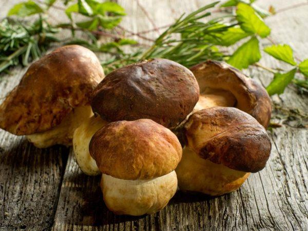 Применяется две схемы выращивания белых грибов