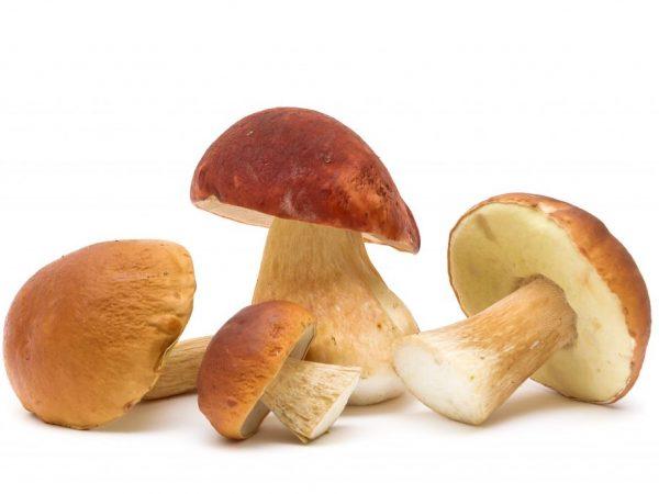 Чистка и обработка белых грибов