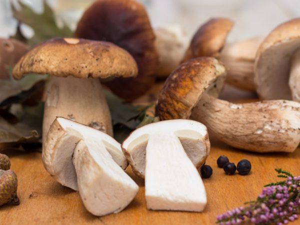Белые грибы чистить несложно