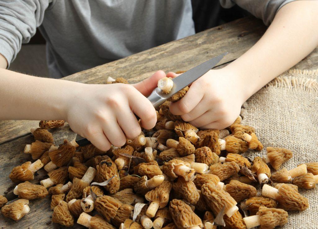 Как из грибов удалить червяков