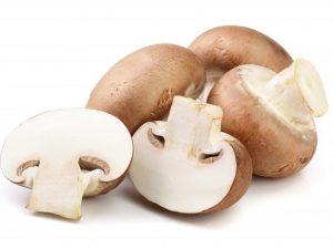Описание гриба королевский шампиньон
