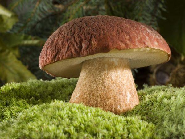 Тщательно обрабатывайте грибы перед употреблением