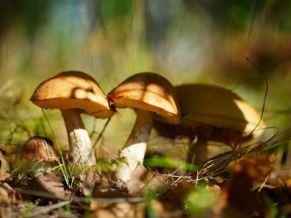 В Подмосковье много грибных мест