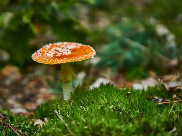 Ядовитые грибы вызывают сильное отравление