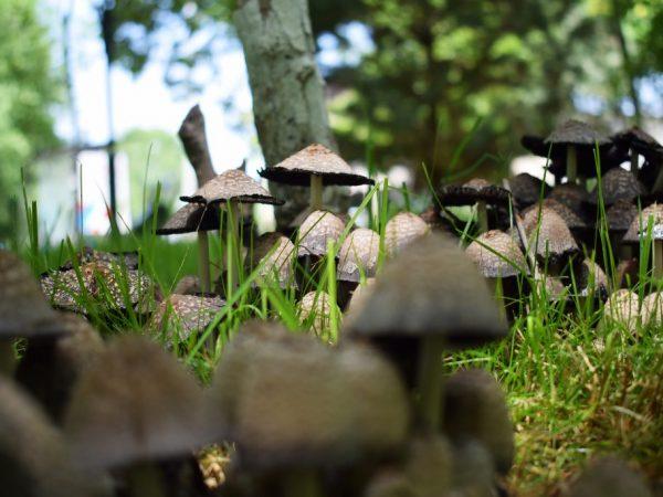 Азотные удобрения могут помочь вывести грибы