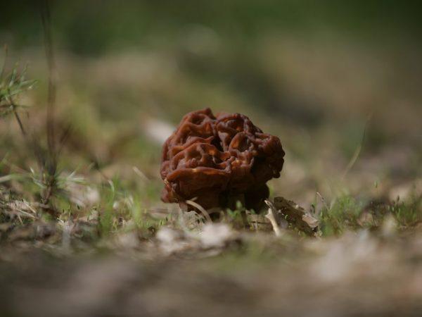Настойка из грибов укрепляет иммунитет