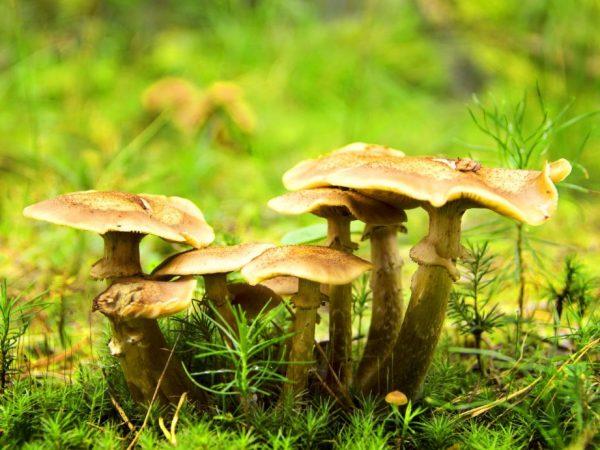 Подмосковье богато грибами
