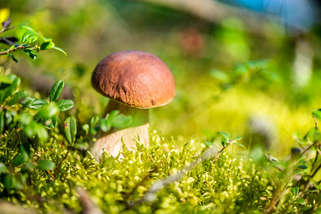дсп грибы забайкальского края фото описание и название грибов форма крупный размер