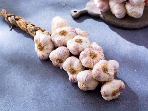 Способы плетения кос из чеснока