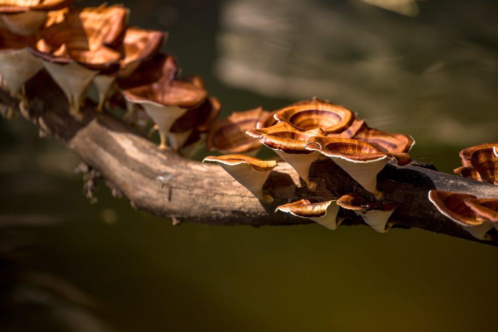Шляпочные грибы способ питания