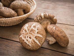 Особенности грибов шиитаке