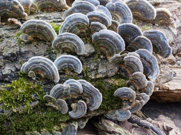 Симбиоз грибов и деревьев