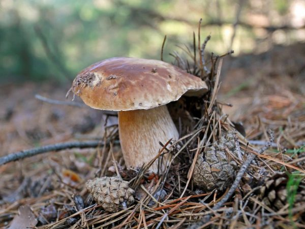Осень хороша для сбора грибов