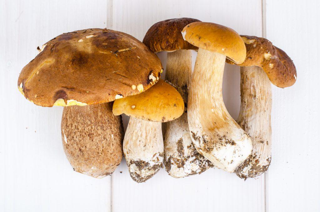 Обзор всех грибов с белой шляпкой — как найти нужный