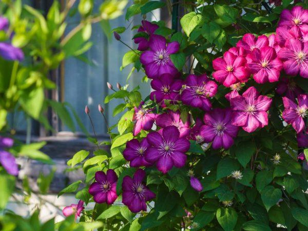 Цветы нуждаются в удобрении