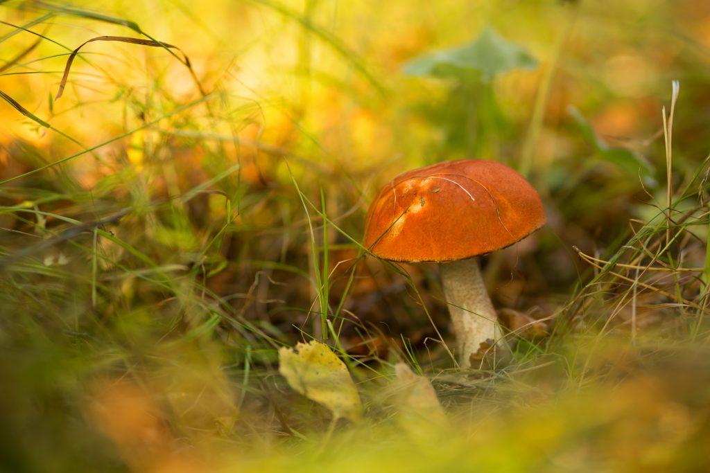 Северные грибы фото тундры и того