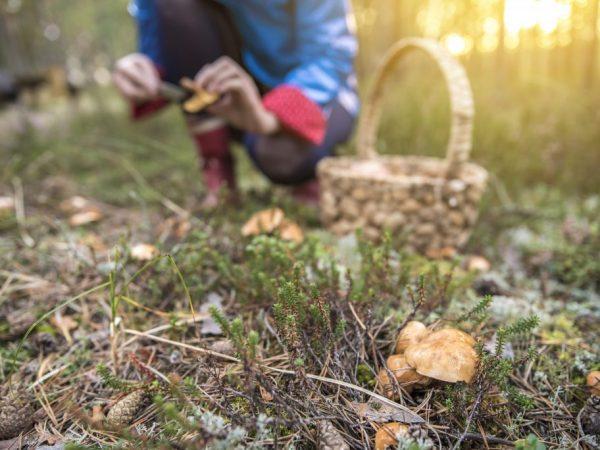 Можно самостоятельно составить карту грибных мест