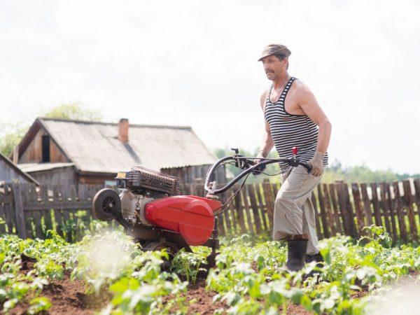Окучивание повышает урожайность картофеля