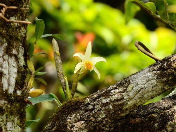 Орхидеи растут на деревьях с шершавой корой