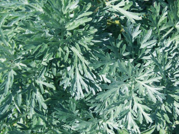 Растения обладают полезными свойствами