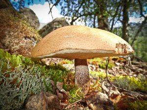 Технология поиска грибов