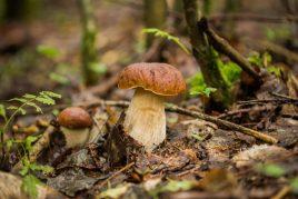 Значение грибов в природе