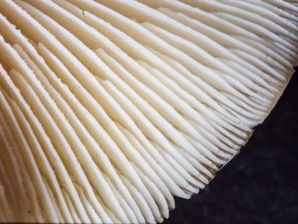 Шляпка самое главное у гриба