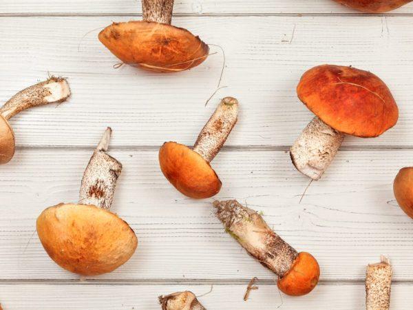 Строение грибов очень сложное