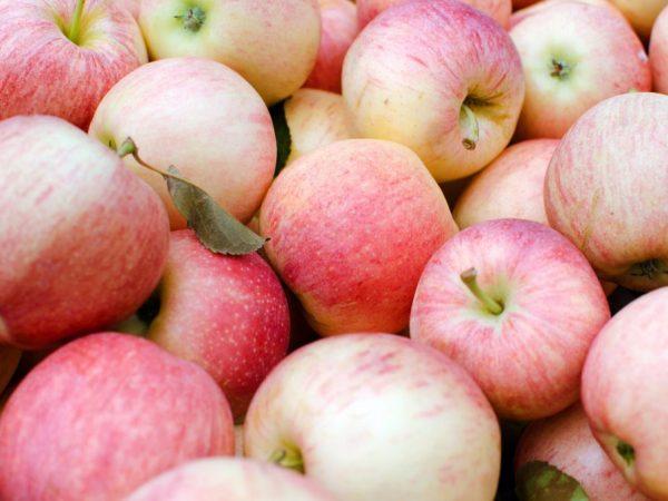 При правильном уходе плоды не заставят себя ждать