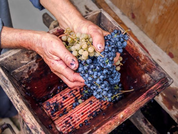 Самостоятельное изготовление дробилки для винограда