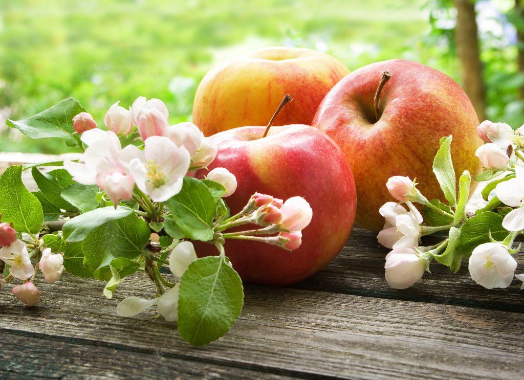 Выращивание и уход за яблоней сорта Глостер