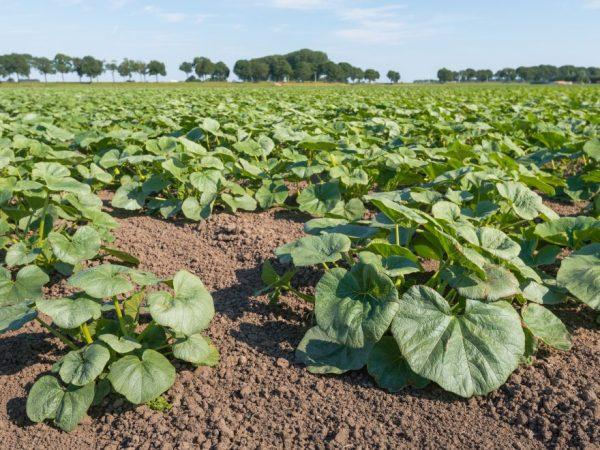 Подкормки увеличат урожайность растений