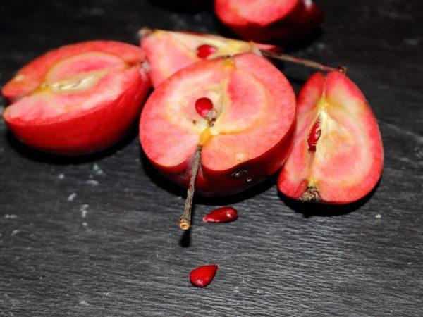 Выращивание яблони Розовый жемчуг