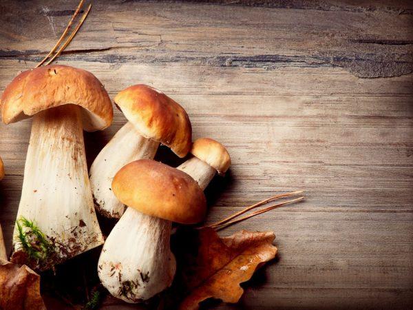 Некоторые виды грибов можно выращивать дома