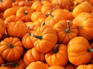 Минералы и витамины в тыкве