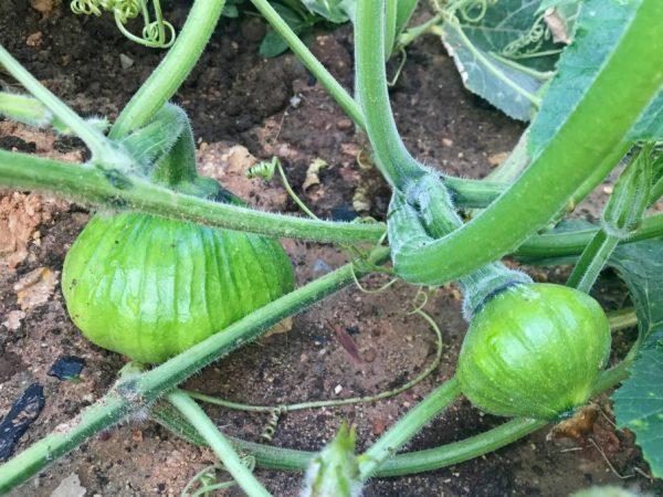 Удобрения повысят урожайность растений